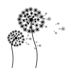 Silhouette flying blow dandelion buds vector