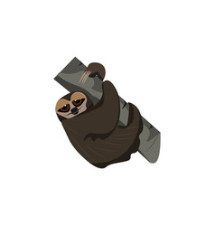Sloth bear or color vector