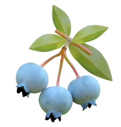 Blueberry on branches vector image