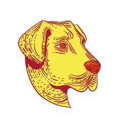 Anatolian shepherd dog head etching color vector