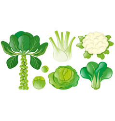 Different types of green vegetables vector