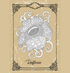 Drawing rafflesia vector