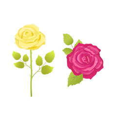 Rose flower in pink and yellow color stem vector
