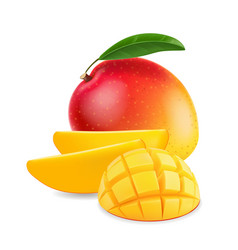 Fruit mango with mango slice realistic vector