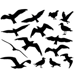 set of birds silhouettes 15 in 1 on white vector image