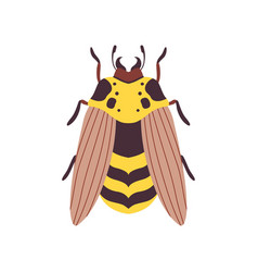 Wasp flying insect top view vector