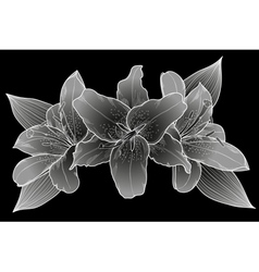 bouquet of lilies Black white and gray vector image