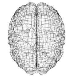 3d outline brain rendering of vector