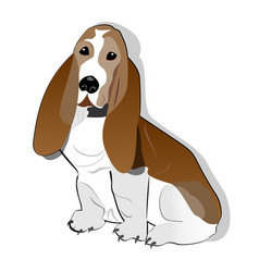 Basset hound isolated drawing on white background vector