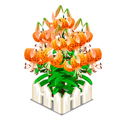 Blooming orange lilies in the middle of fence vector