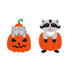 Flat cat sitting at pumpkin racoon set vector