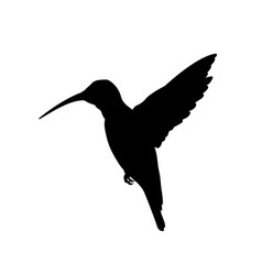 Black silhouette of colibri isolated image vector
