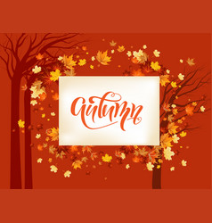 fall maple leaves background vector image