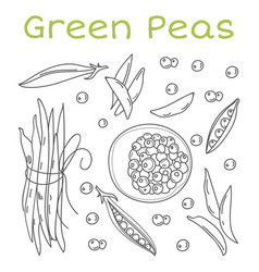 pea pods and pods vintage vector image
