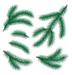 set of fir branch vector image