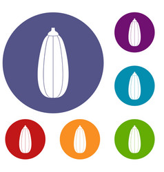 zucchini vegetable icons set vector image
