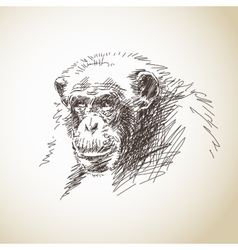 Sketch of chimpanzee head vector image vector image