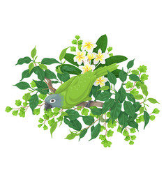 green parrot on tree branch vector image vector image