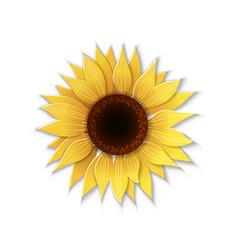 paper art sunflower vector image