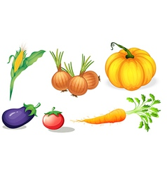 Healthy vegetables and spices vector