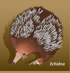 Realistic picture of echidna close-up isolated vector