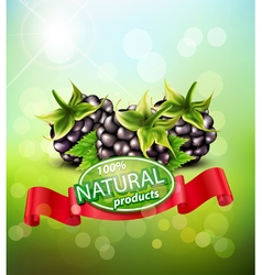 background with blackberries and red ribbon vector image vector image