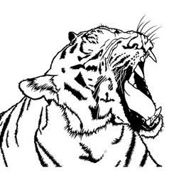 Roaring Tiger vector image