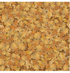 autumn oak leaves background vector image