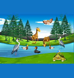 many animals in nature vector image
