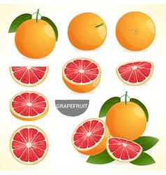 Fruit Set of grapefruit in various styles format vector image