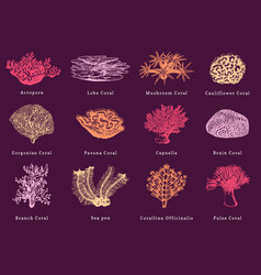 color corals collection vector image