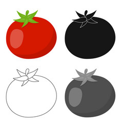 Tomato icon cartoon singe vegetables icon from vector
