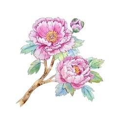 Watercolor chinese peony flower vector