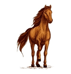 Arabian brown horse stomping hoof sketch vector