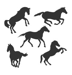 beautiful horse silhouette graphic design vector image