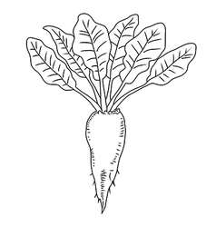 Beetroot vegetable Line Mangelwurzel vector image