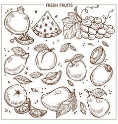 Fruits sketch icons farm fresh exotic vector