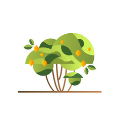 green tree with lemons garden shrub with ripe vector image