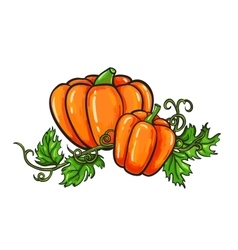 Pumpkin drawing Isolated cartoon vegetable vector