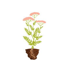 Tall plant with pink inflorescence vector