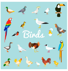 a set of domestic and wild birds in a flat style vector image vector image
