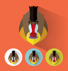 mandrill portrait with flat design vector image vector image