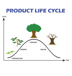 product life cycle on white background vector image vector image