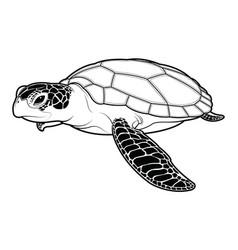 sea turtle animal cartoon on white background vector image