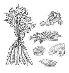 carrot hand drawn set vector image