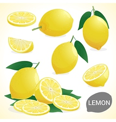 Fruit set of lemon in various styles vector