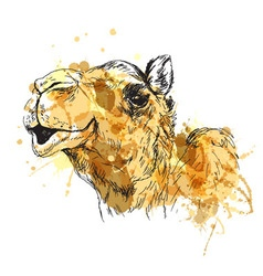Colored hand sketch of the head of a camel vector image