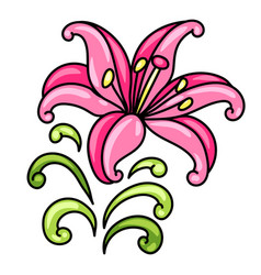 decorative lily vector image