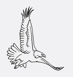 eagle bird flying sketch vector image