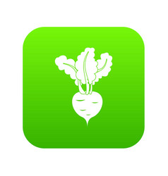 fresh beetroot icon digital green vector image
